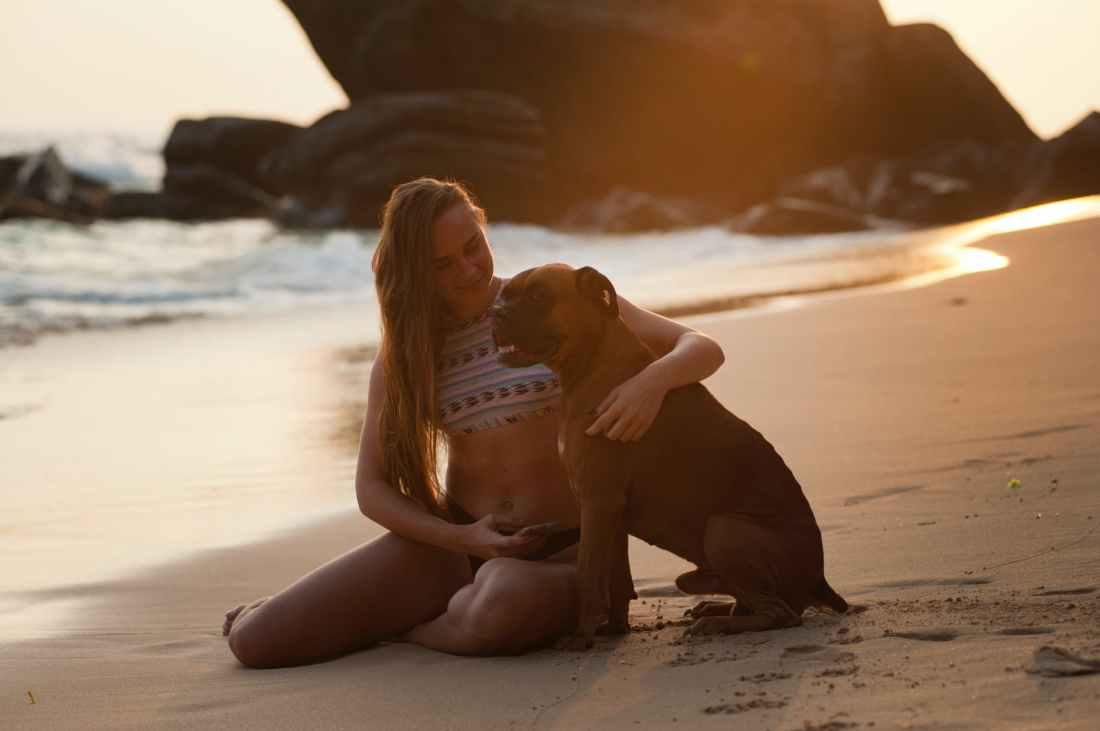 adult animal beach blur